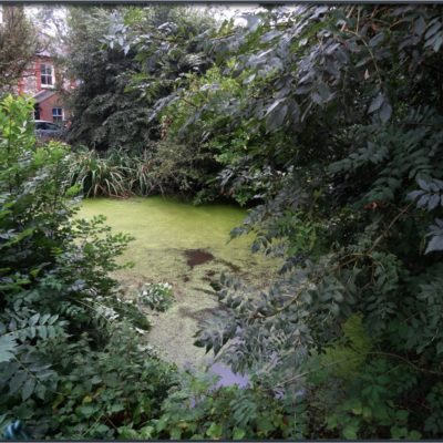 Templewood Pond