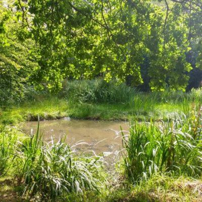 Vincents Pond